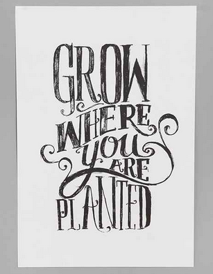 grow-where-you-re-planted